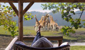 Safari Resort Beekse Bergen5